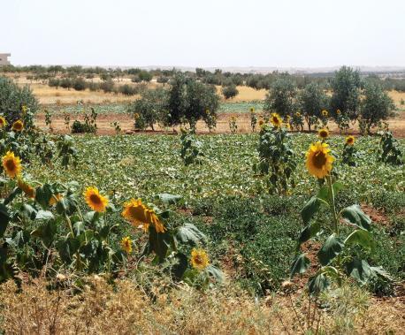 Al Khadr, South Hebron Hills, West Bank, 2010. Source: EWASH.