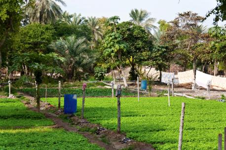 Agriculture in Bahrain, 2011. Source: Michele Solmi.