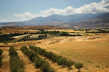 Mount Hermon in the Golan Heights, Syria, 2008. Source: Adel Samara.