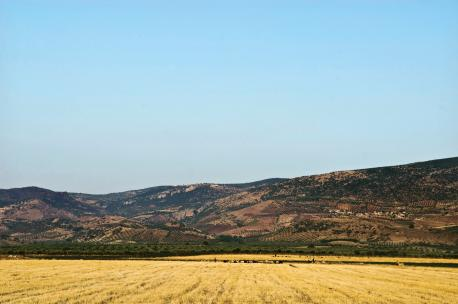 Agricultural fields along the Syrian-Turkish border, Turkey, 2010. Source: Adel Samara.