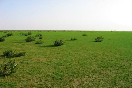 Hafr al Batin area, Saudi Arabia, 2007. Source: Drh104.