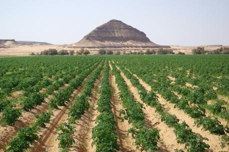 Agriculture in the Disi-Mudawwara area, Jordan, 2009. Source: Andreas Renck.