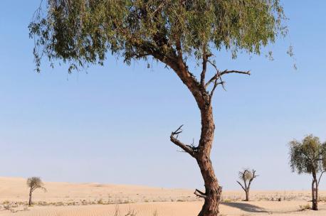 Rub' al Khali Desert, Oman, 2011. Source: Philipp Weigell.
